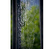 Spider Web Dew Photographic Print