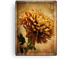 Vintage Chrysanthemum Canvas Print