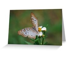 White butterfly on Spanish Needles 2 Greeting Card
