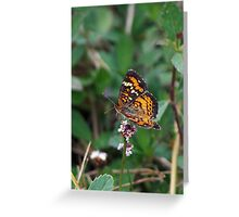 Phaon Crescent butterfly Greeting Card