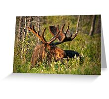 Moose In Meadow Greeting Card