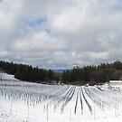 Snowy Vineyard by NancyC