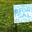 For Sale by Joe Mortelliti