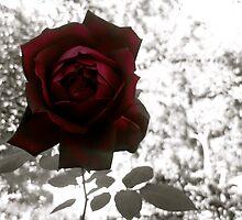 Red Flower by Rae Breaux