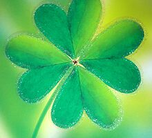 Luck of the Irish  by ©The Creative  Minds
