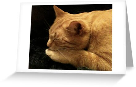 Spike Kitty in Repose by Ann Marie Hoff