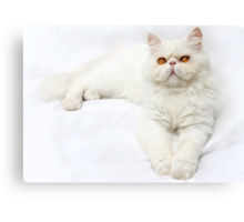 Perfectly, Elegantly, Charmingly Ugly Canvas Print