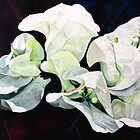 """Bugambilia"" - oil painting of white bougainvillea blossoms by James  Knowles"