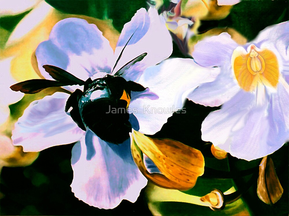 """Laticia"" - Mexican flower and a large black bee by James  Knowles"