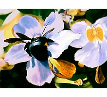 """Laticia"" - Mexican flower and a large black bee Photographic Print"