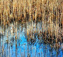 """""""Marshland Reflections"""" by waddleudo"""