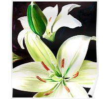 """English Lilies"" - white lilies Poster"