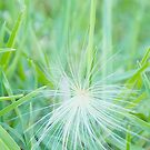 Wispy grass  by MIchelle Thompson