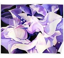 """Dancing Bugambilia"" - purple bougainvillea blossoms Poster"