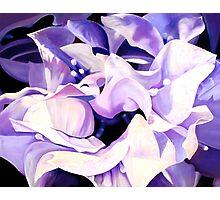 """""""Dancing Bugambilia"""" - purple bougainvillea blossoms Photographic Print"""