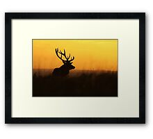The Pride Of Nature Framed Print