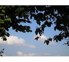 My Window to the Sky Photographic Print