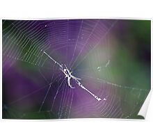 Spider Thread in Web Poster