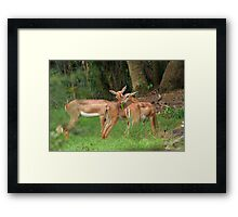 Bambi and Friends Framed Print