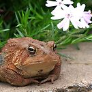 Just a Little Toad by Lolabud