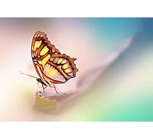 Malachite Butterfly Photographic Print