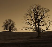 Lone trees at sunset by StefanFierros