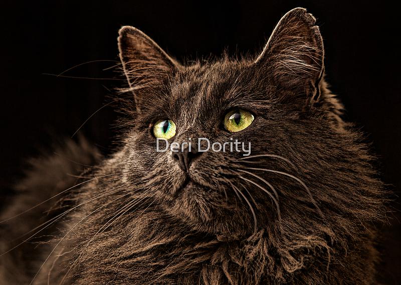 Winston  by Deri Dority