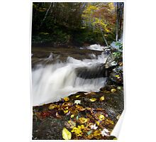 Stream in Pisgah National Forest Poster