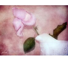 The Spent Rose Photographic Print