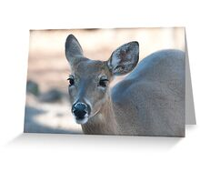 Beautiful Deer with Long Eyelashes Greeting Card