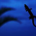 Blue Gecko by Matthew Pugh