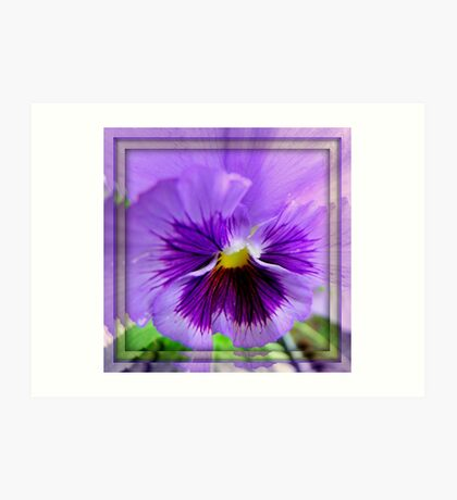 Mirrored Pansy Art Print