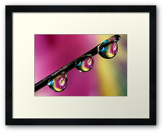Needle with Tulip Drops by Sharon Johnstone