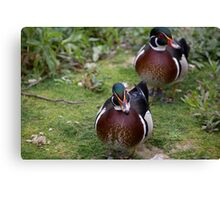Colourful Ducks Canvas Print