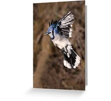 Blue Jay Greeting Card