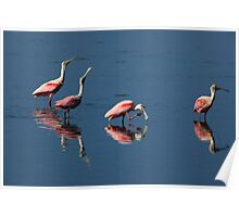 roseate spoonbill 's Poster