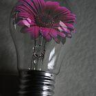 flowering bulb by Doug McRae