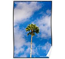 Palm Tree With A Blue Sky Poster