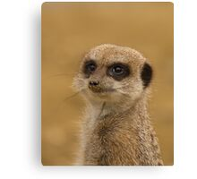 TitleGrubby Nosed Meercat Canvas Print