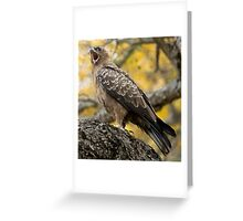 Wahlberg's Eagle Greeting Card