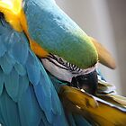Blue Macaw by Juana Maria Garcia Domenech