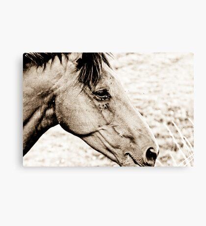 Equus III Canvas Print