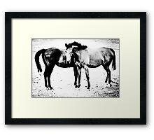 Equus II Framed Print