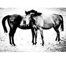 Equus II Photographic Print