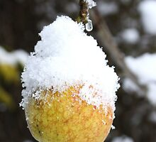 Frosted Fruit by Charles  Staig