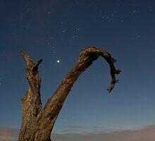 Moonlight Tree by Scott Sheehan