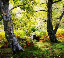 Ancient woodlands, Gunnerside by Guy Carpenter