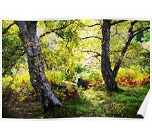 Ancient woodlands, Gunnerside Poster