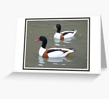 Handsome pair! Greeting Card