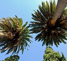 Palm Trees in LA, CA by Joe Bashour